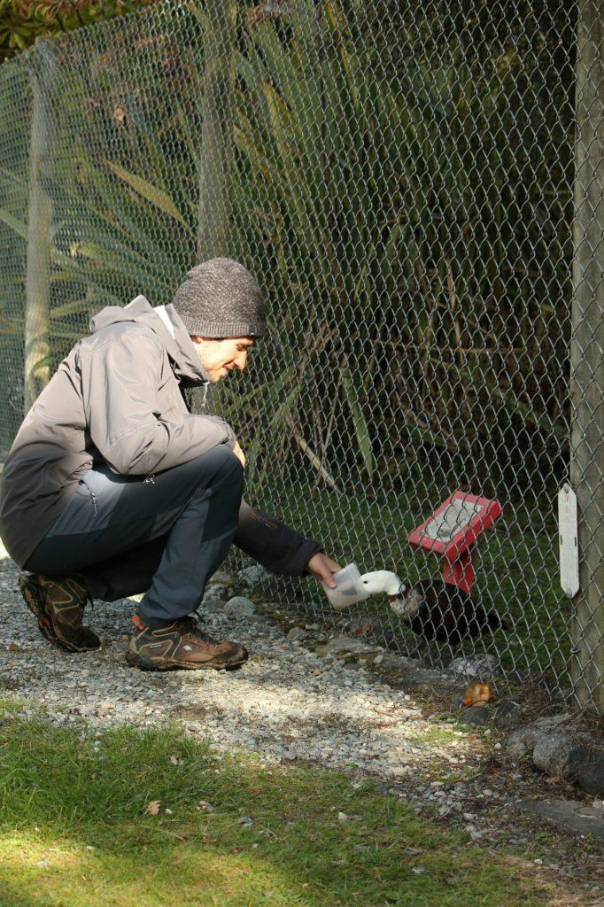 Victor a encore trouvé un pote canard