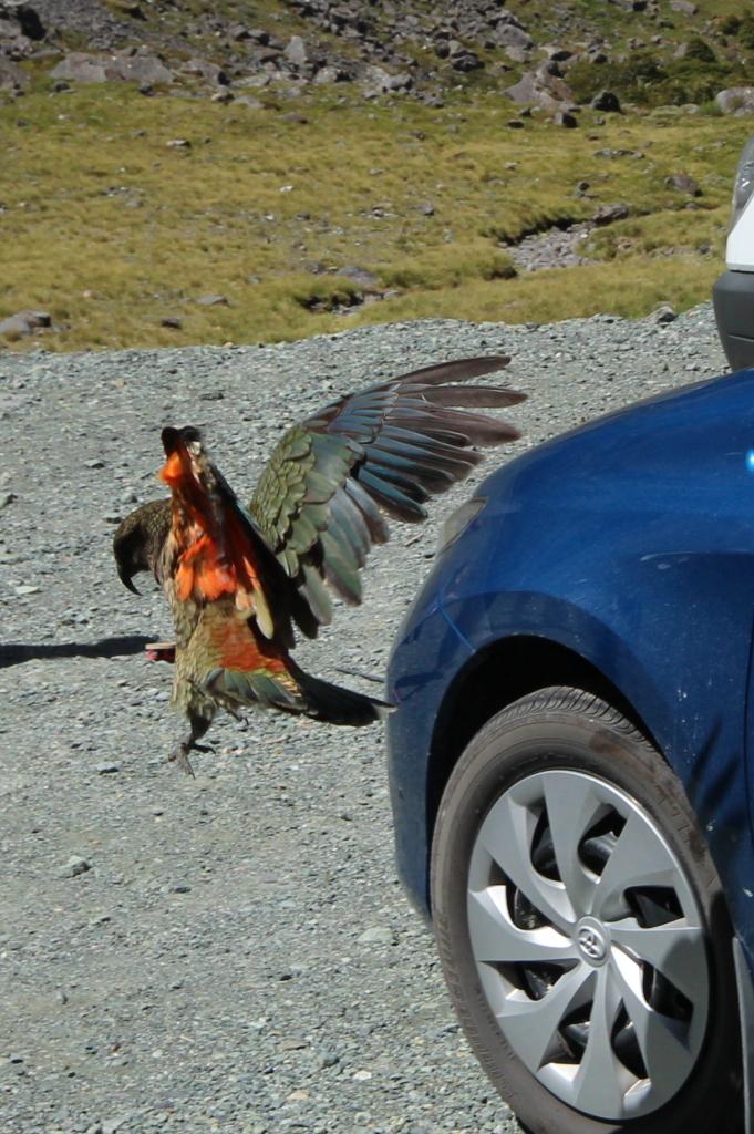 Si votre ramage se rapporte à votre plumage, vous êtes le phénix des hôtes de ces bois !