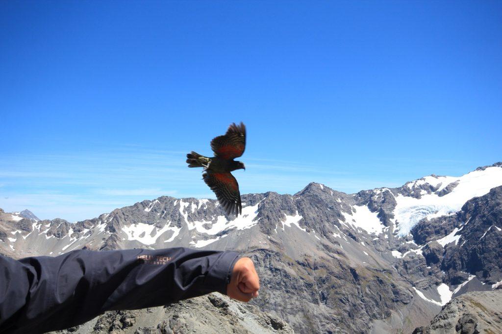 Victor s'essaye à la fauconnerie avec le kea (et accessoirement pourrit ma photo).